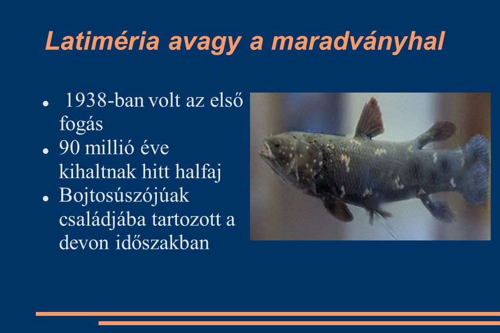 Latiméria avagy a maradványhal 1938-ban volt az első fogás 90 millió éve kihaltnak hitt halfaj Bojtosúszójúak családjába tartozott a devon időszakban