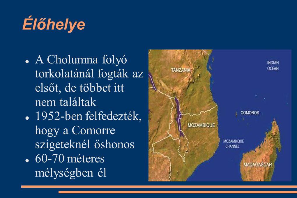 Élőhelye A Cholumna folyó torkolatánál fogták az elsőt, de többet itt nem találtak 1952-ben felfedezték, hogy a Comorre szigeteknél őshonos 60-70 méte