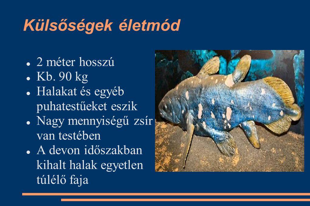 Külsőségek életmód 2 méter hosszú Kb. 90 kg Halakat és egyéb puhatestűeket eszik Nagy mennyiségű zsír van testében A devon időszakban kihalt halak egy
