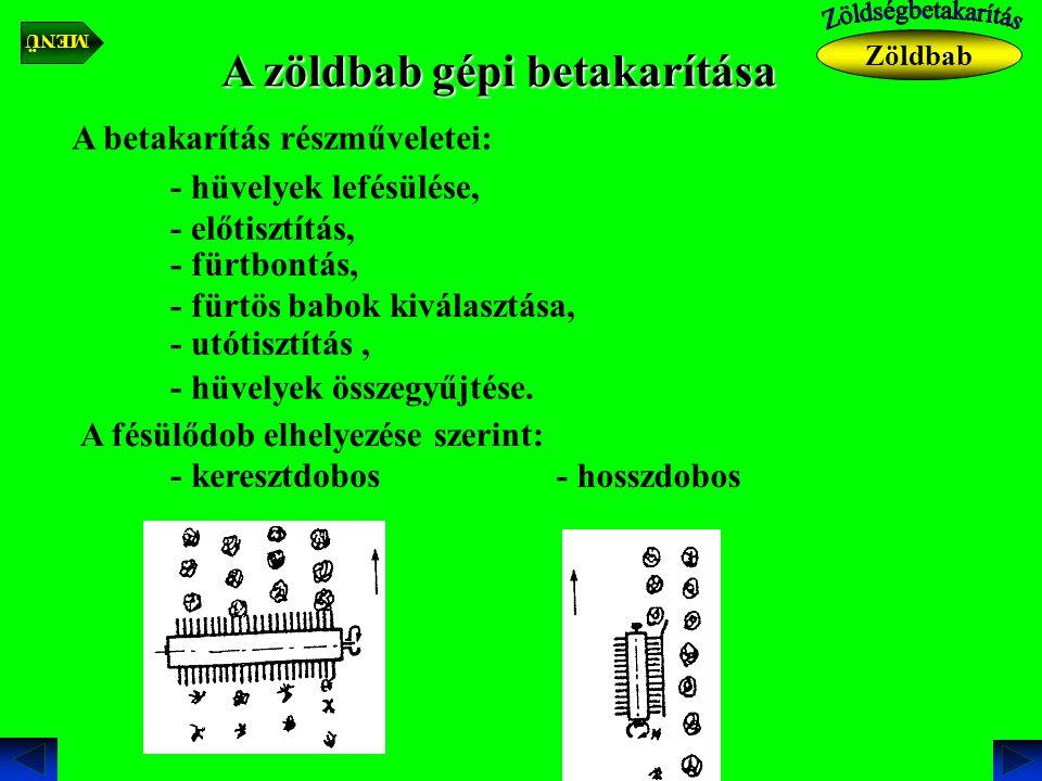 A zöldbab gépi betakarítása A betakarítás részműveletei: - hüvelyek lefésülése, - előtisztítás, - fürtbontás, - fürtös babok kiválasztása, - utótisztítás, - hüvelyek összegyűjtése.