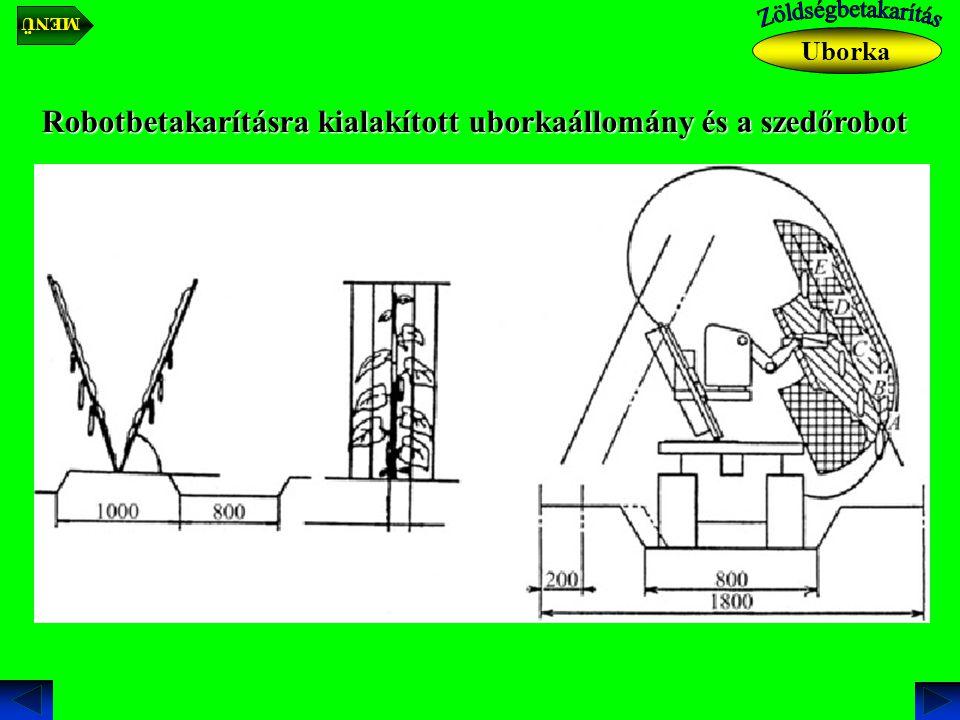 Robotbetakarításra kialakított uborkaállomány és a szedőrobot Uborka MENÜ
