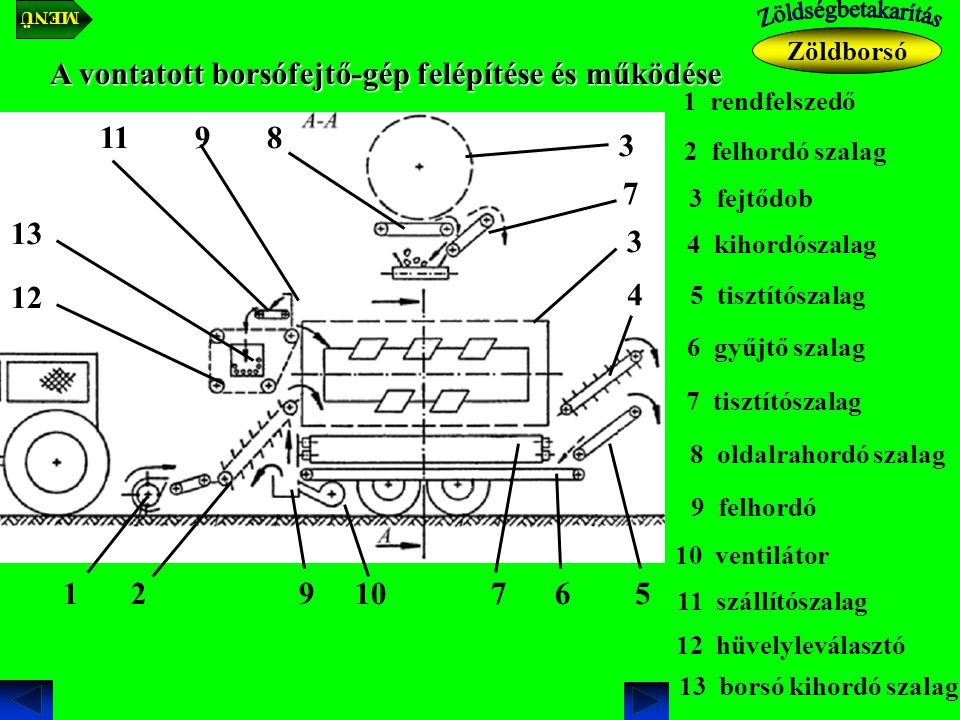 A vontatott borsófejtő-gép felépítése és működése 1 rendfelszedő 1 2 felhordó szalag 2 3 fejtődob 3 4 kihordószalag 4 5 tisztítószalag 5 6 gyűjtő szalag 6 7 tisztítószalag 7 8 oldalrahordó szalag 8 9 felhordó 9 10 ventilátor 11 11 szállítószalag 10 3 7 9 12 12 hüvelyleválasztó 13 13 borsó kihordó szalag Zöldborsó MENÜ