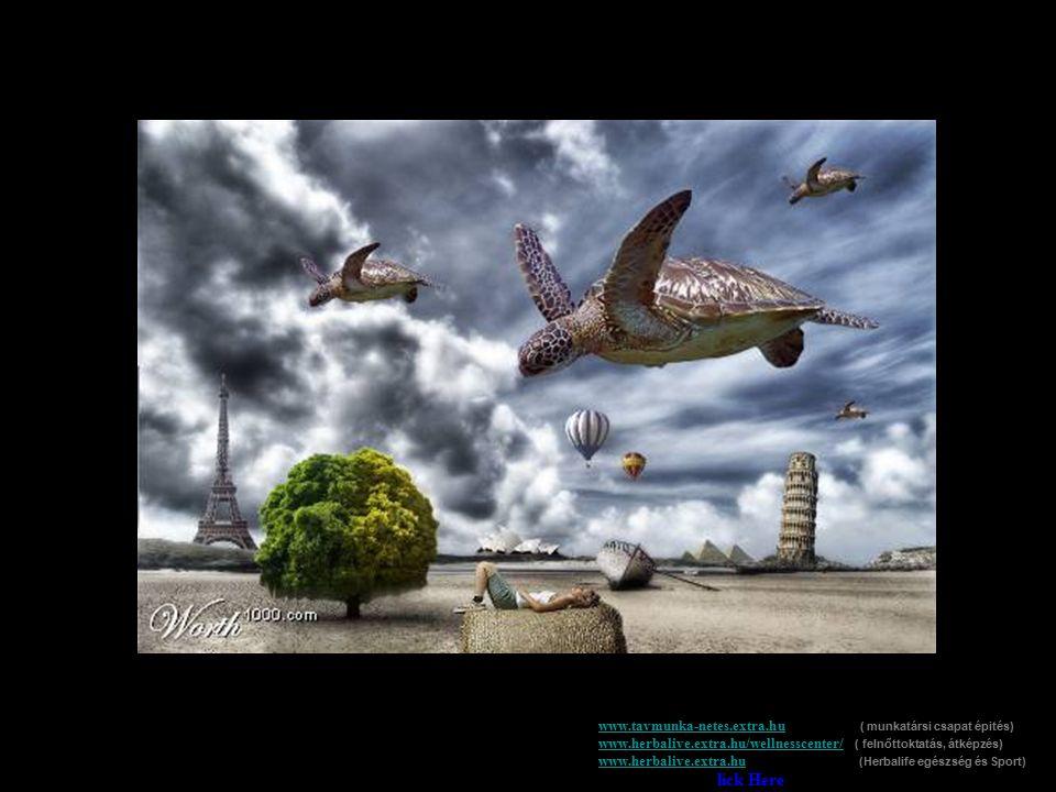 www.tavmunka-netes.extra.huwww.tavmunka-netes.extra.hu ( munkatársi csapat épités) www.herbalive.extra.hu/wellnesscenter/ ( felnőttoktatás, átképzés)
