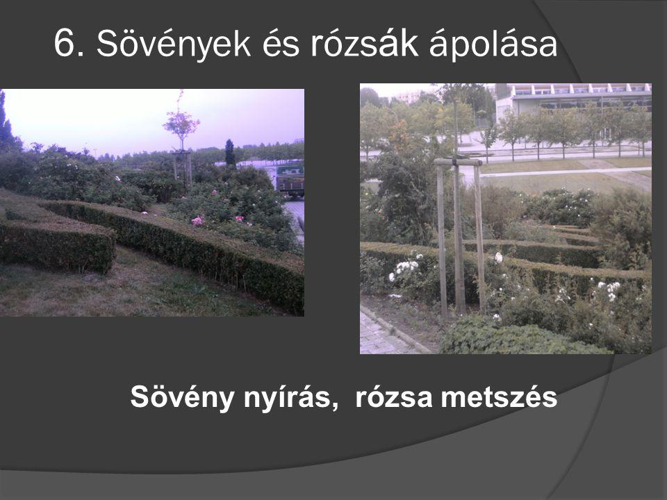 6. Sövények és r ózs ák ápolása Sövény nyírás, rózsa metszés