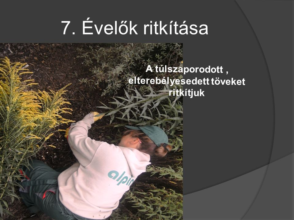 7. Évelők ritkítása A túlszaporodott, elterebélyesedett töveket ritkítjuk