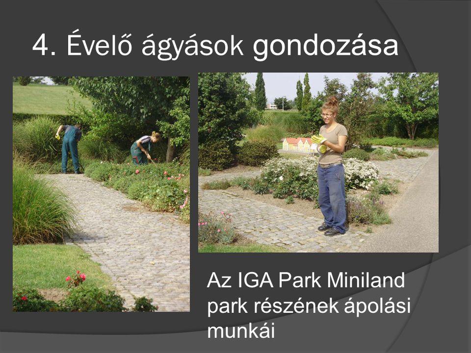 4. Évelő ágyások gondozása Az IGA Park Miniland park részének ápolási munkái