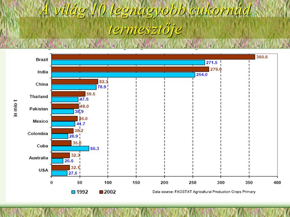A világ 10 legnagyobb cukornád termesztője
