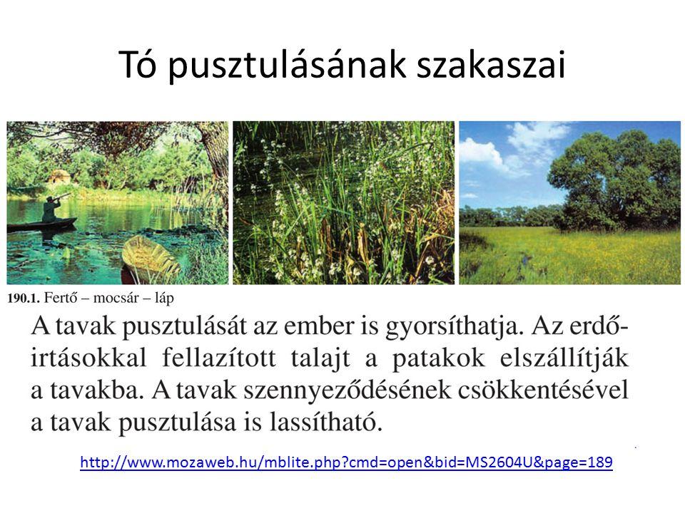 Tó pusztulásának szakaszai http://www.mozaweb.hu/mblite.php?cmd=open&bid=MS2604U&page=189