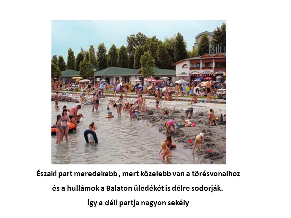 Velencei-tó Árkos süllyedékben keletkezett, mint a Balaton Nádasok törik meg a vízfelületet, pusztul