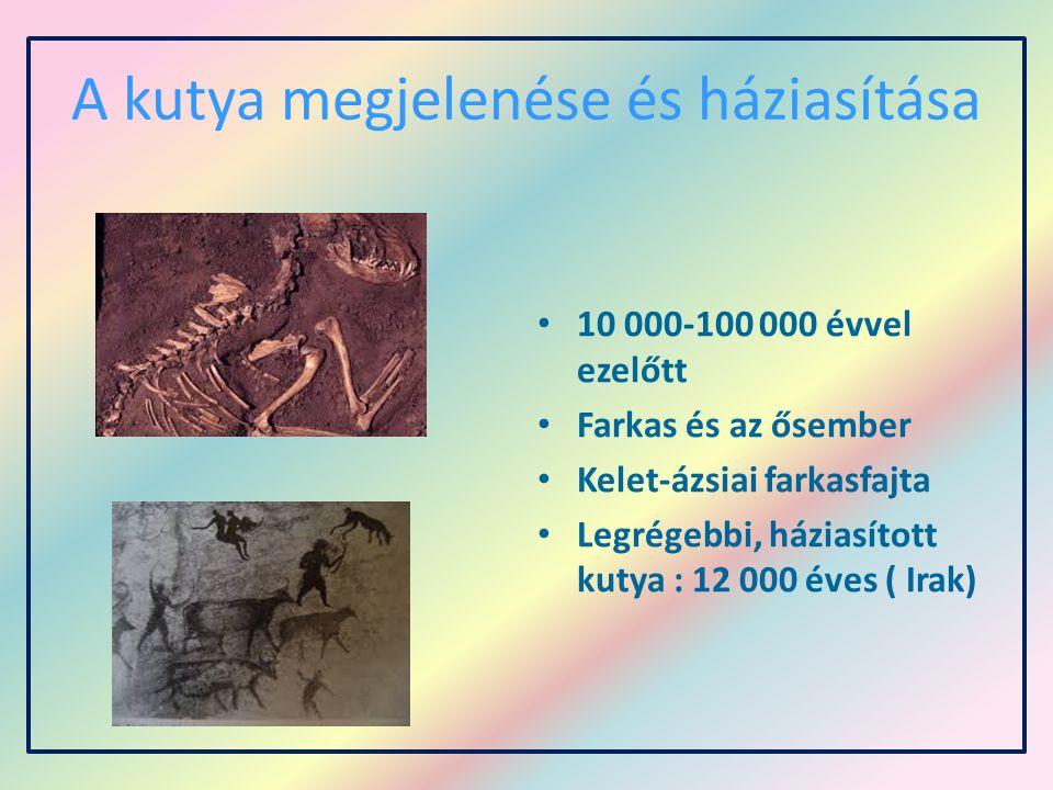 A kutya megjelenése és háziasítása 10 000-100 000 évvel ezelőtt Farkas és az ősember Kelet-ázsiai farkasfajta Legrégebbi, háziasított kutya : 12 000 é