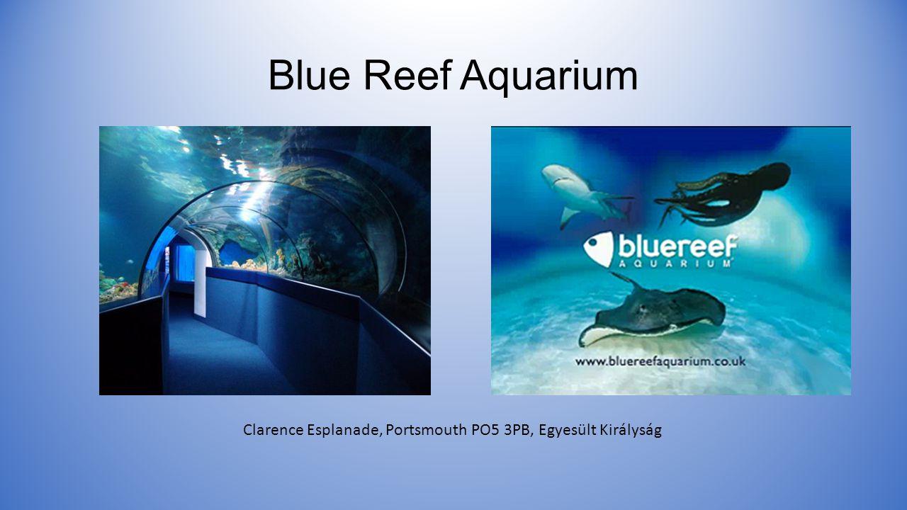 Blue Reef Aquarium Clarence Esplanade, Portsmouth PO5 3PB, Egyesült Királyság