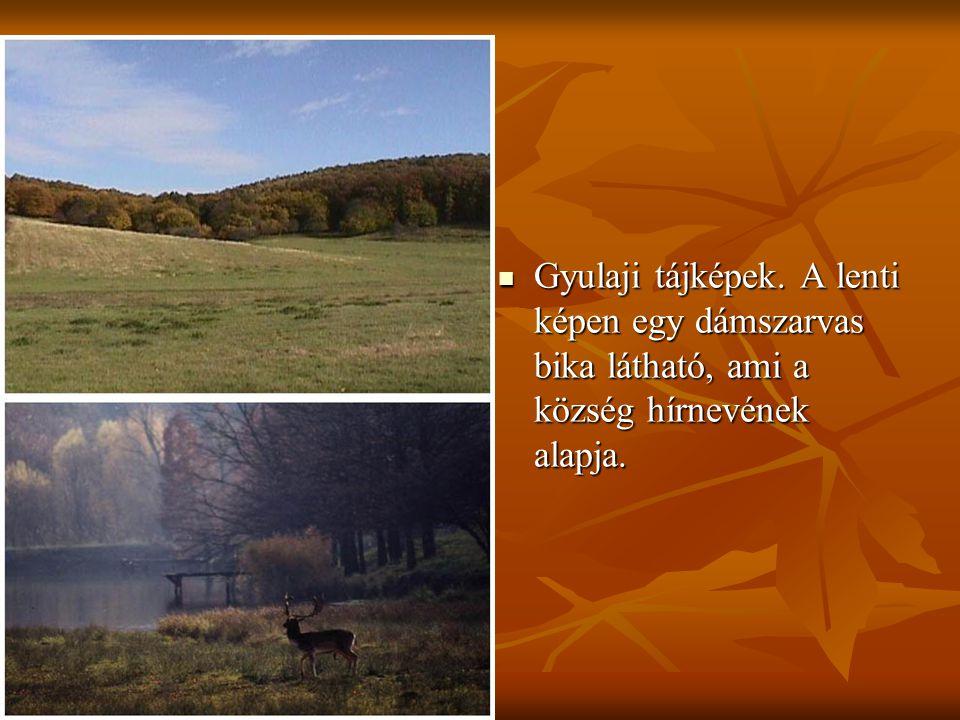 Gyulaji tájképek.A lenti képen egy dámszarvas bika látható, ami a község hírnevének alapja.