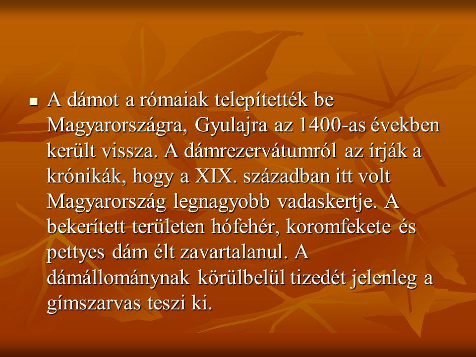 A dámot a rómaiak telepítették be Magyarországra, Gyulajra az 1400-as években került vissza.