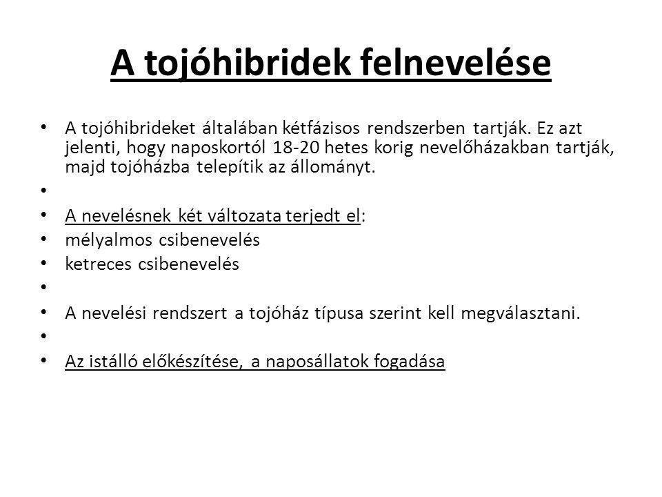 A tojóhibridek felnevelése A tojóhibrideket általában kétfázisos rendszerben tartják.