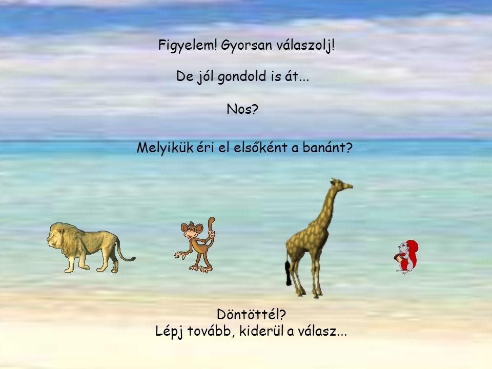 4 állat áll a kókuszpálma alatt: oroszlán majom zsiráf mókus Úgy döntenek, versenyezni fognak. Melyik éri el leggyorsabban a banánt? Szerinted? Ki nye