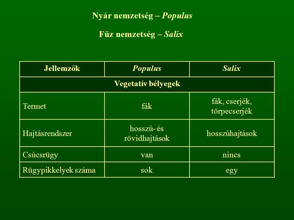 JellemzőkPopulusSalix Vegetatív bélyegek Termetfák fák, cserjék, törpecserjék Hajtásrendszer hosszú- és rövidhajtások hosszúhajtások Csúcsrügyvannincs
