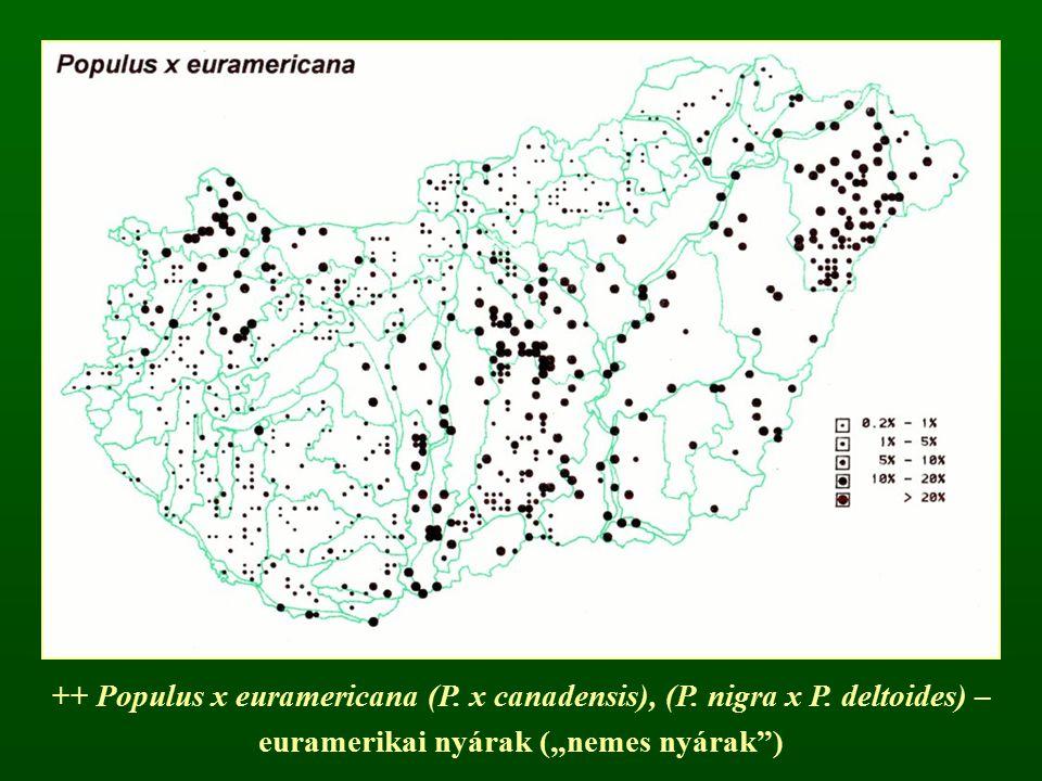 "++ Populus x euramericana (P. x canadensis), (P. nigra x P. deltoides) – euramerikai nyárak (""nemes nyárak"")"
