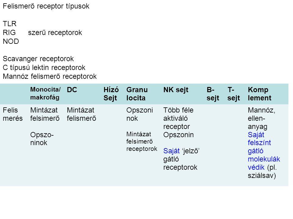 Monocita/ makrofág DCHízó Sejt Granu locita NK sejtB- sejt T- sejt Komp lement Felis merés Mintázat felsimerő Opszo- ninok Mintázat felismerő Opszoni nok Mintázat felsimerő receptorok Több féle aktiváló receptor Opszonin Saját 'jelző' gátló receptorok Mannóz, ellen- anyag Saját felszínt gátló molekulák védik (pl.