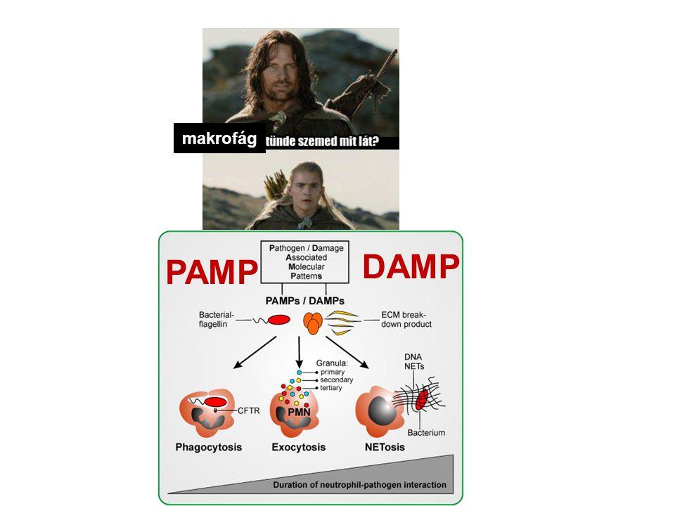PAMP DAMP makrofág