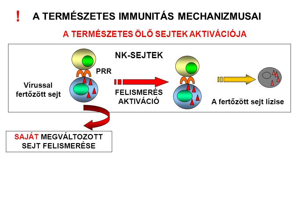 A fertőzött sejt lízise A TERMÉSZETES IMMUNITÁS MECHANIZMUSAI A TERMÉSZETES ÖLŐ SEJTEK AKTIVÁCIÓJA NK-SEJTEK Vírussal fertőzött sejt PRR FELISMERÉS AK