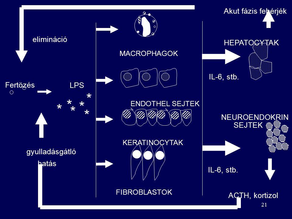 20 kiváltó ingerek baktérium (endotoxin) virus szövet elhalás égés, stress jelzorendszer máj akut fázis reakció citokinek (IL-6, TNF, IL-1 LIF, IL-11) sejtek (makrophag, endothel keratinocyta, fibroblast) hemosztázis gyökfogók komplement antiproteázok akut fázis fehérjék