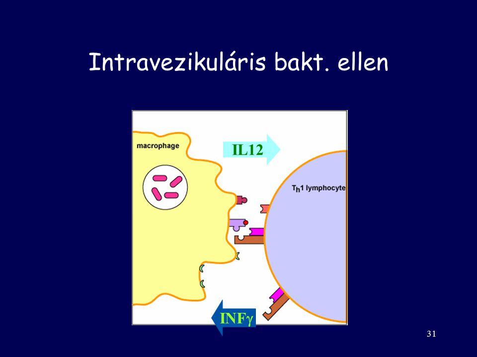 30 Szerzett –Th2  IL-4, IL-5 –plazma sejtek Antitestek Neutralizálás, opszonizáció, kompl. akt.