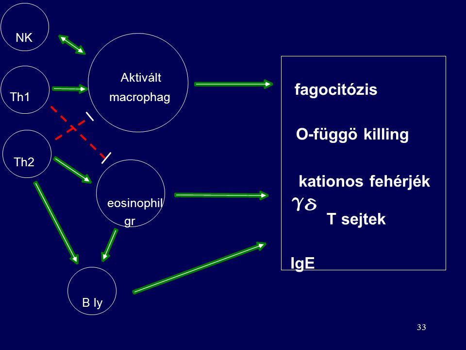 """32 Immunválasz paraziták ellen Pl. Trypanosoma (álomkór), Ascaris (orsóféreg) Eliminációjuk nehéz –nagy méret –eukarióták """"kimerítik"""" az immunrendszer"""