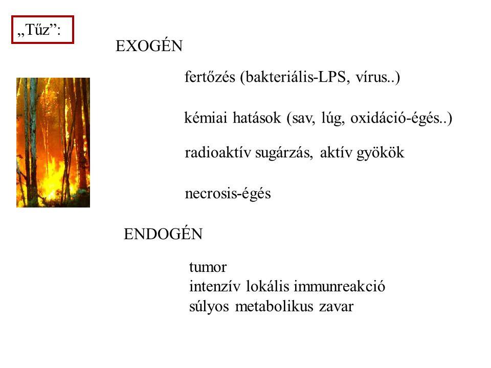 """6 """"Tűz : fertőzés (bakteriális-LPS, vírus..) kémiai hatások (sav, lúg, oxidáció-égés..) necrosis-égés radioaktív sugárzás, aktív gyökök tumor intenzív lokális immunreakció súlyos metabolikus zavar EXOGÉN ENDOGÉN"""