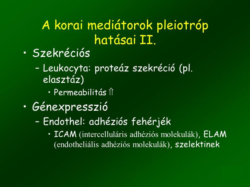 7 A korai mediátorok pleiotróp hatásai I. Kemotaktikus –Leukocyta toborzás Szekréciós –Hízósejt degranuláció: hisztamin Vasodilatáció