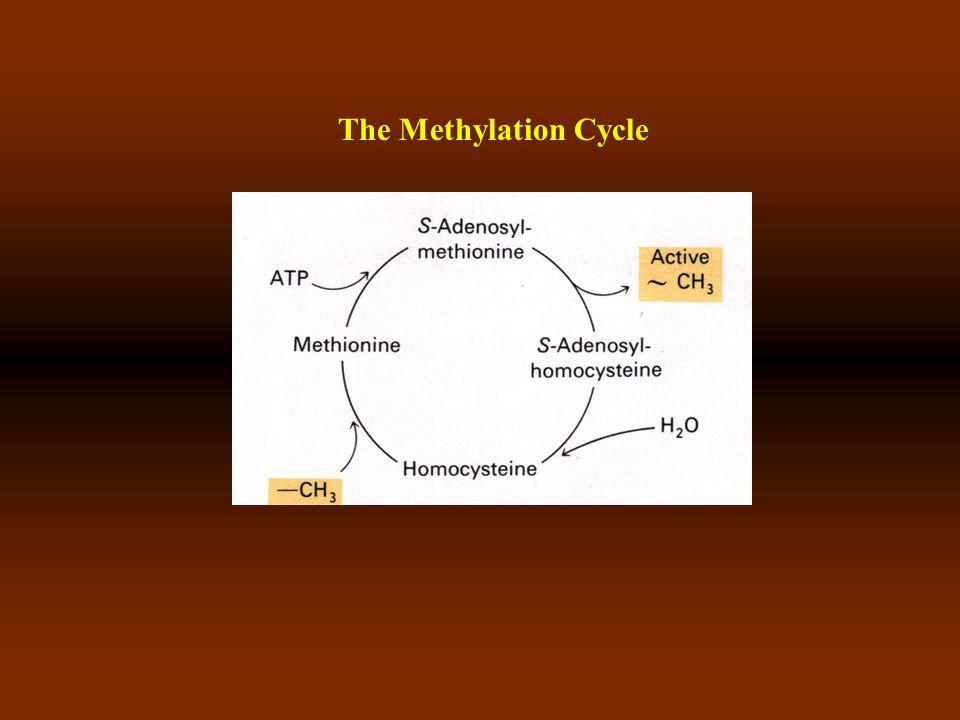 Cytosine and dervatives