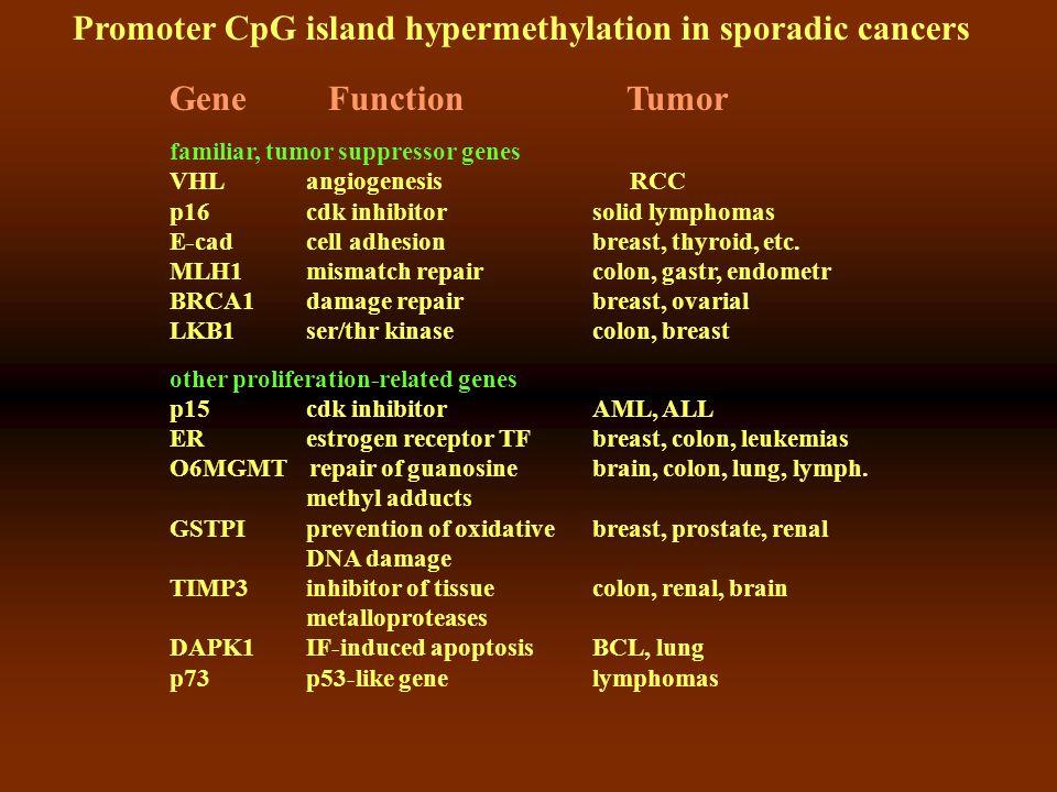 Promoter CpG island hypermethylation in sporadic cancers Gene Function Tumor familiar, tumor suppressor genes VHL angiogenesis RCC p16 cdk inhibitorso