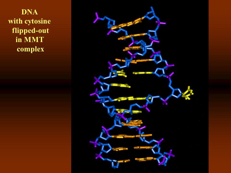 DNA and DNA-methyltransferase comlex