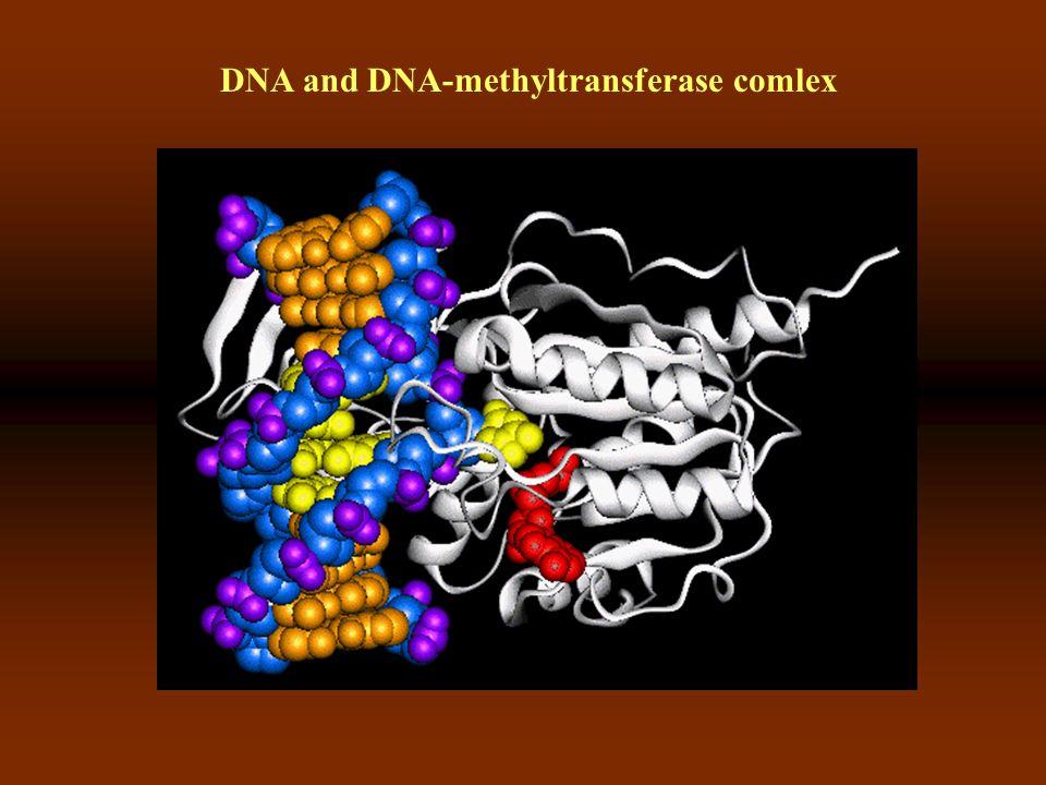 Epigenetikai változások = genom metiláció http://www.epigenx.com/methylation-cancer.htm kb.
