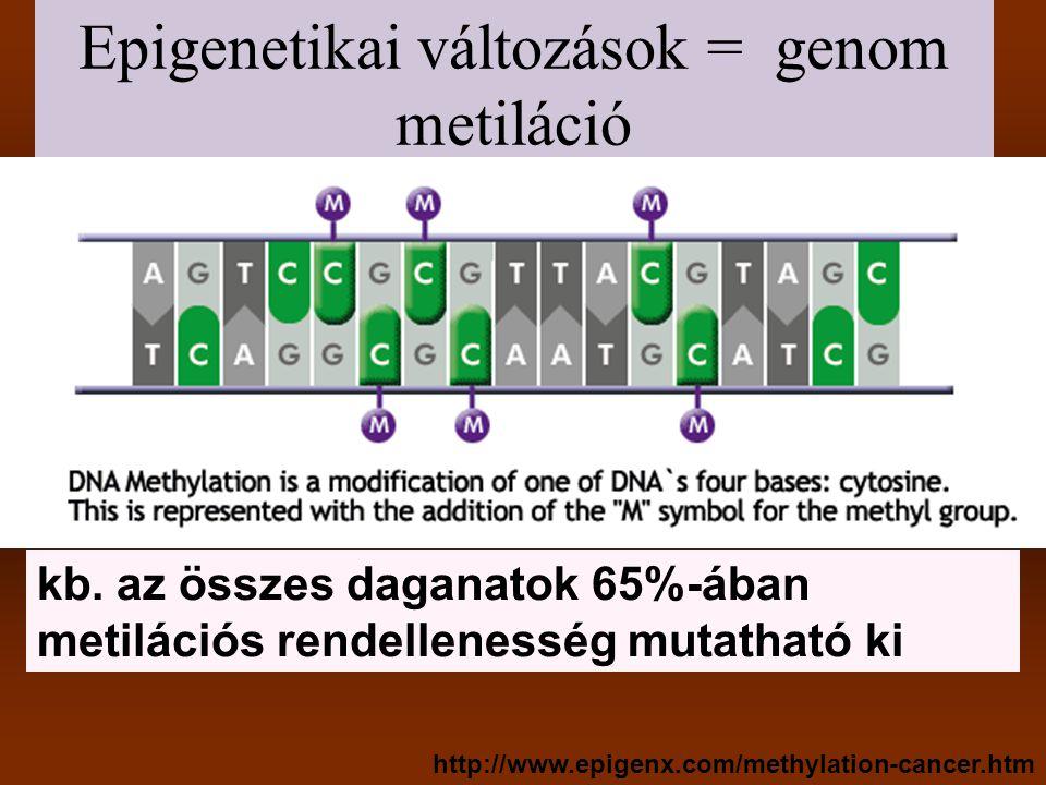 DNS metiláció mutációt okozhat a humán genomban a számítottnál kevesebb CpG dinukleotid van, feltehetően az 5-metilcitozin timinné (U) történő dezaminációjának következtében