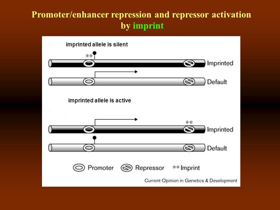 Clustered imprinted genes