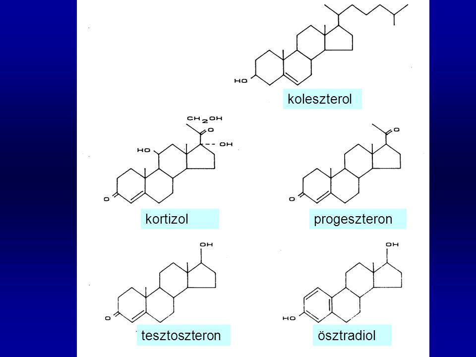 koleszterol tesztoszteronösztradiol kortizolprogeszteron