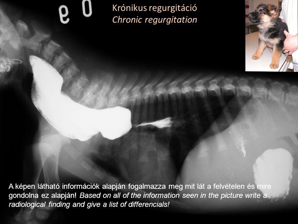 Krónikus regurgitáció Chronic regurgitation A képen látható információk alapján fogalmazza meg mit lát a felvételen és mire gondolna ez alapján! Based