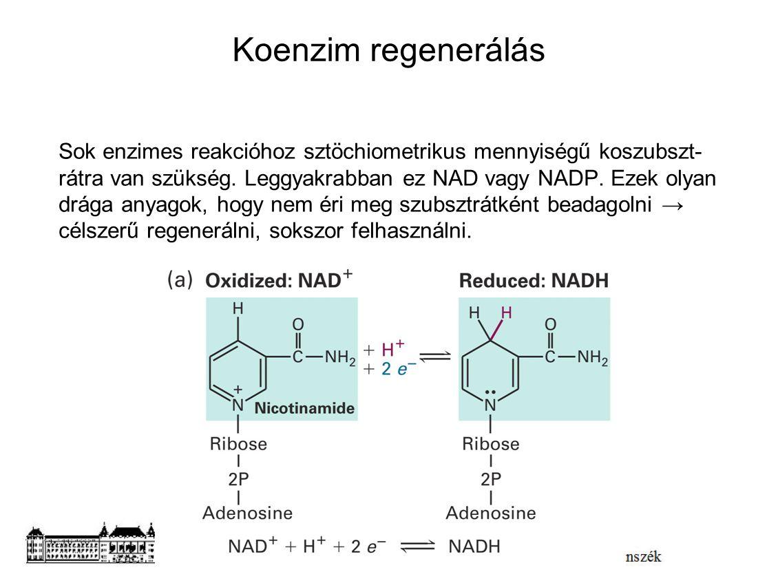 Koenzim regenerálás Sok enzimes reakcióhoz sztöchiometrikus mennyiségű koszubszt- rátra van szükség. Leggyakrabban ez NAD vagy NADP. Ezek olyan drága