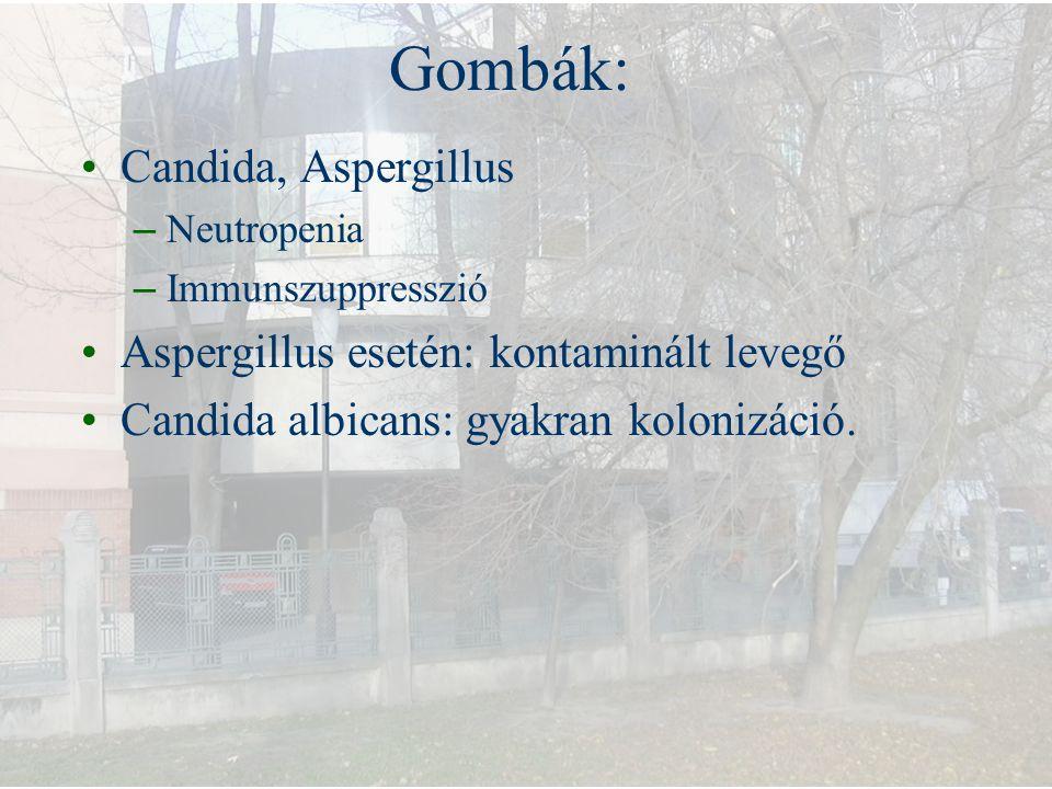 Gombák: Candida, Aspergillus – Neutropenia – Immunszuppresszió Aspergillus esetén: kontaminált levegő Candida albicans: gyakran kolonizáció.