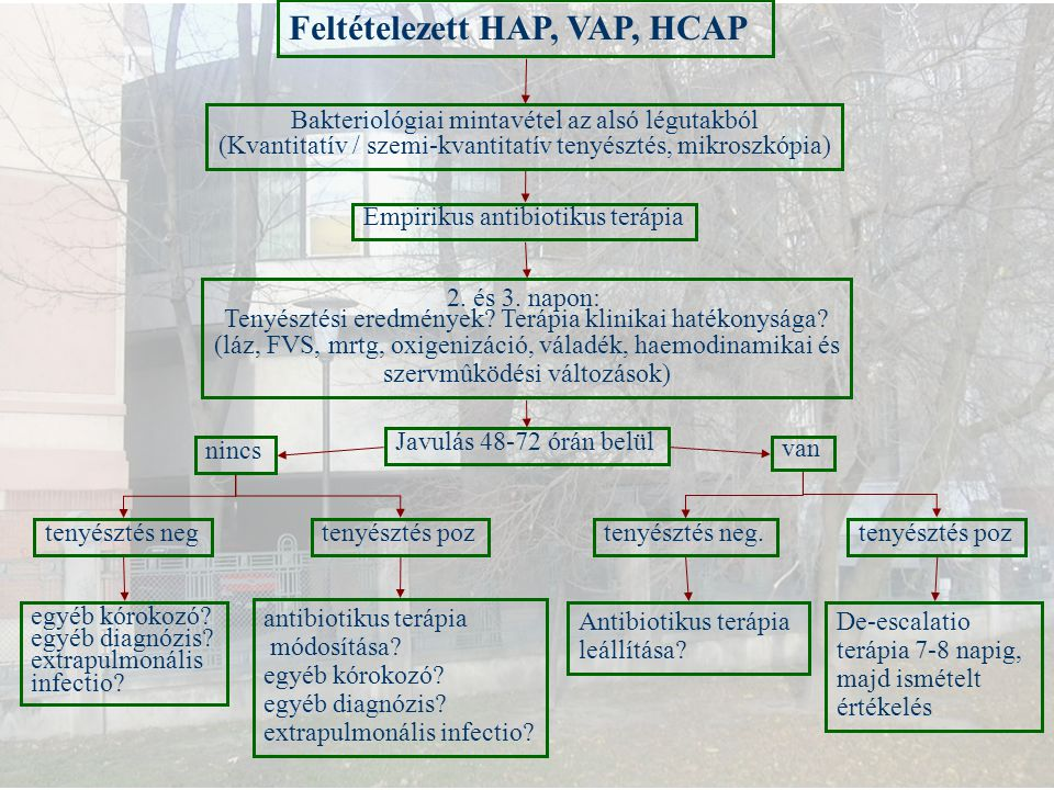 Feltételezett HAP, VAP, HCAP Bakteriológiai mintavétel az alsó légutakból (Kvantitatív / szemi-kvantitatív tenyésztés, mikroszkópia) Empirikus antibio