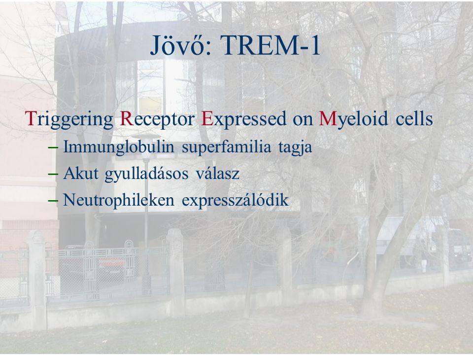 Jövő: TREM-1 Triggering Receptor Expressed on Myeloid cells – Immunglobulin superfamilia tagja – Akut gyulladásos válasz – Neutrophileken expresszálód