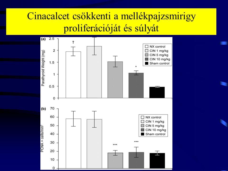 Cinacalcet csökkenti a mellékpajzsmirigy proliferációját és súlyát