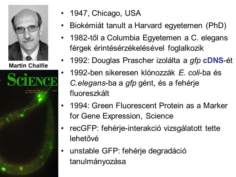 Martin Chalfie 1947, Chicago, USA Biokémiát tanult a Harvard egyetemen (PhD) 1982-től a Columbia Egyetemen a C.
