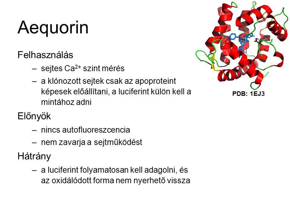 Aequorin Felhasználás –sejtes Ca 2+ szint mérés –a klónozott sejtek csak az apoproteint képesek előállítani, a luciferint külön kell a mintához adni Előnyök –nincs autofluoreszcencia –nem zavarja a sejtműködést Hátrány –a luciferint folyamatosan kell adagolni, és az oxidálódott forma nem nyerhető vissza PDB: 1EJ3