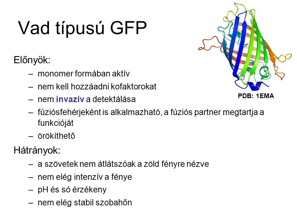GFP kromofór csoport p- hidroxibenzilidénimidazolidinon