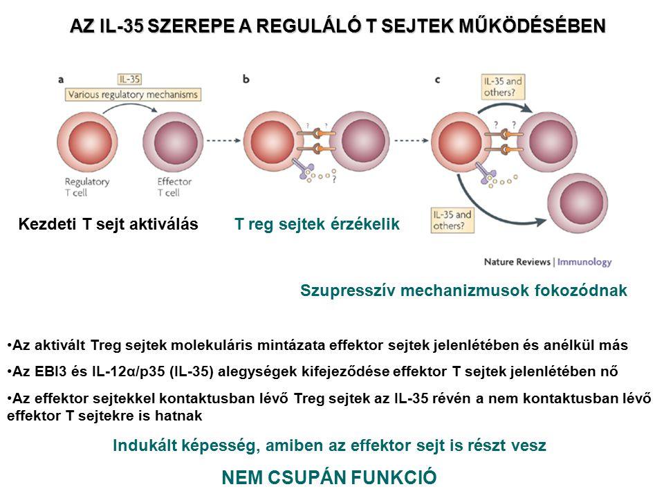 AZ IL-35 SZEREPE A REGULÁLÓ T SEJTEK MŰKÖDÉSÉBEN Indukált képesség, amiben az effektor sejt is részt vesz NEM CSUPÁN FUNKCIÓ Az aktivált Treg sejtek m