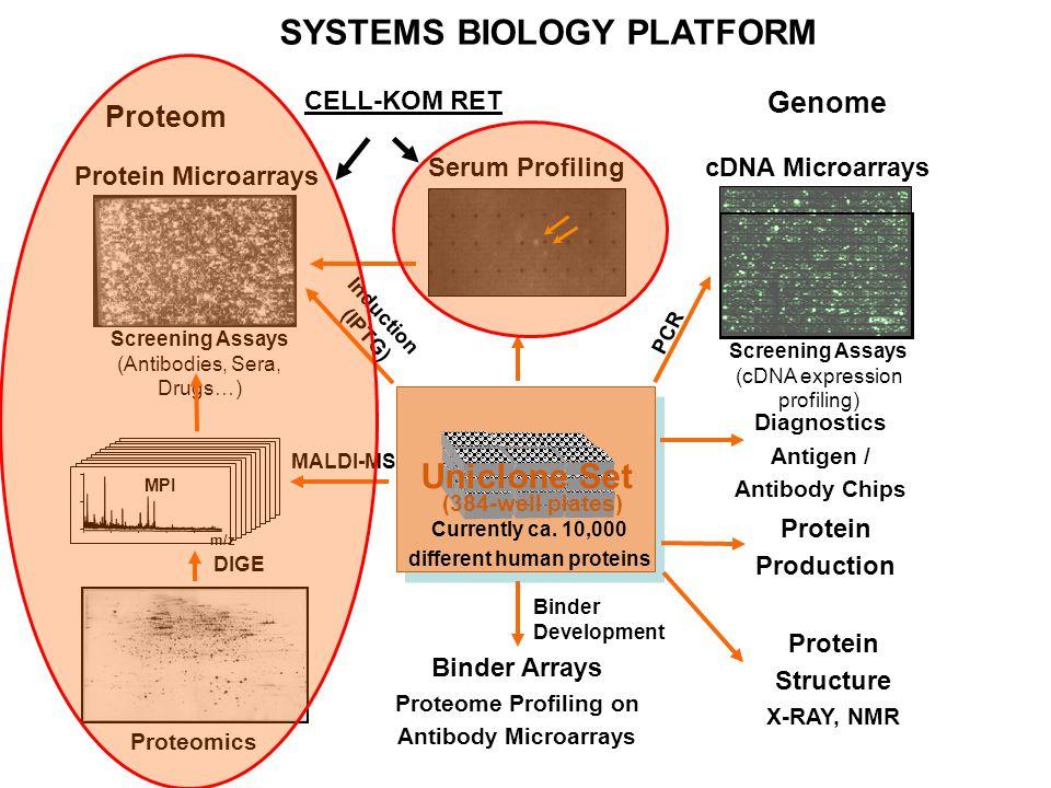 A RENDSZERBIOLÓGIAI MÉRÉS- TECHNOLÓGIÁK KIMENETE JELENLEG Megváltozott gének listája Megváltozott proteinek listája Megváltozott gének statisztikailag validált listája Megváltozott proteinek statisztikailag validált listája Alternatív gén és protein listák valószínűségi sorrendben