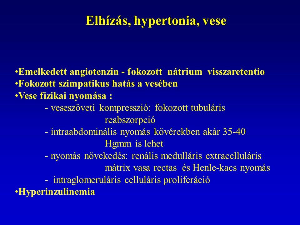 Elhízás, hypertonia, vese Emelkedett angiotenzin - fokozott nátrium visszaretentio Fokozott szimpatikus hatás a vesében Vese fizikai nyomása : - veses