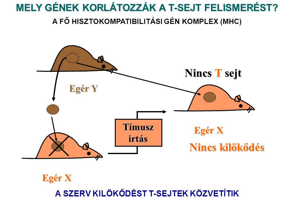 MELY GÉNEK KORLÁTOZZÁK A T-SEJT FELISMERÉST.