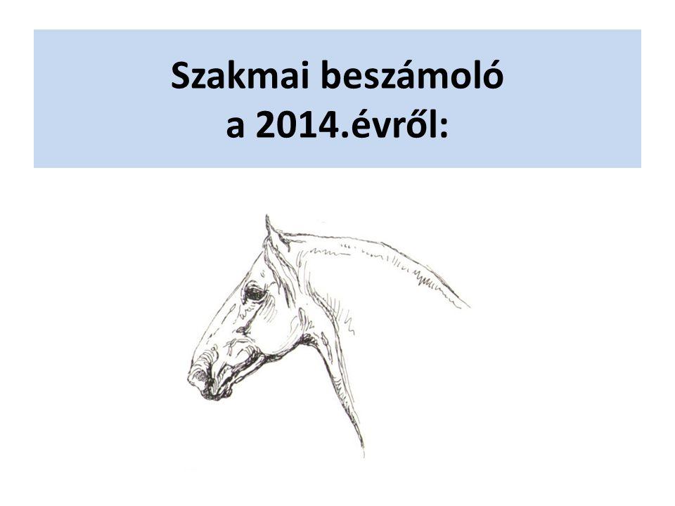 Szakmai beszámoló a 2014.évről: